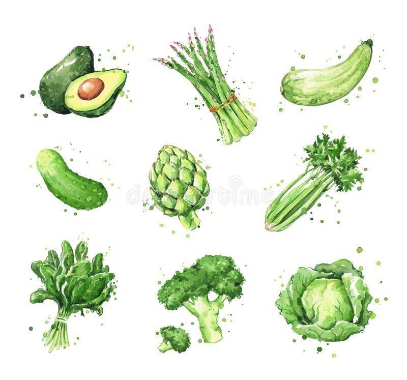 Surtido de comidas verdes, ejemplo de los vegtables de la acuarela stock de ilustración