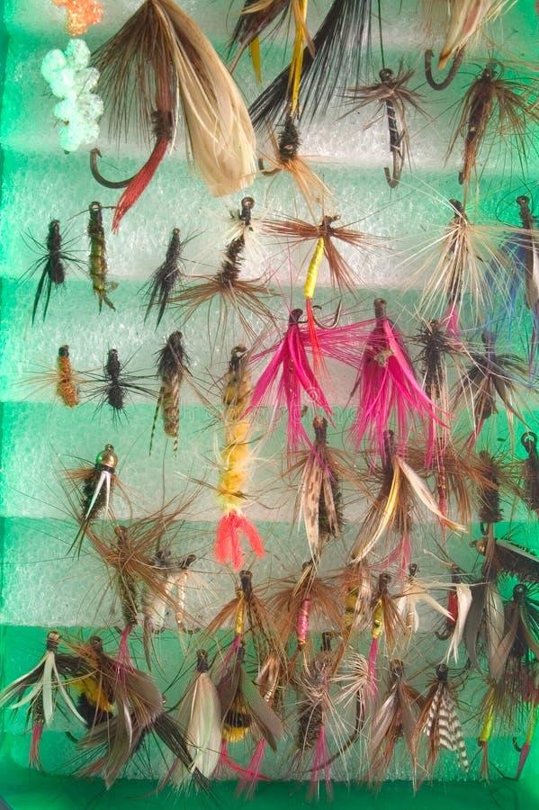 Surtido de la mosca fotos de archivo