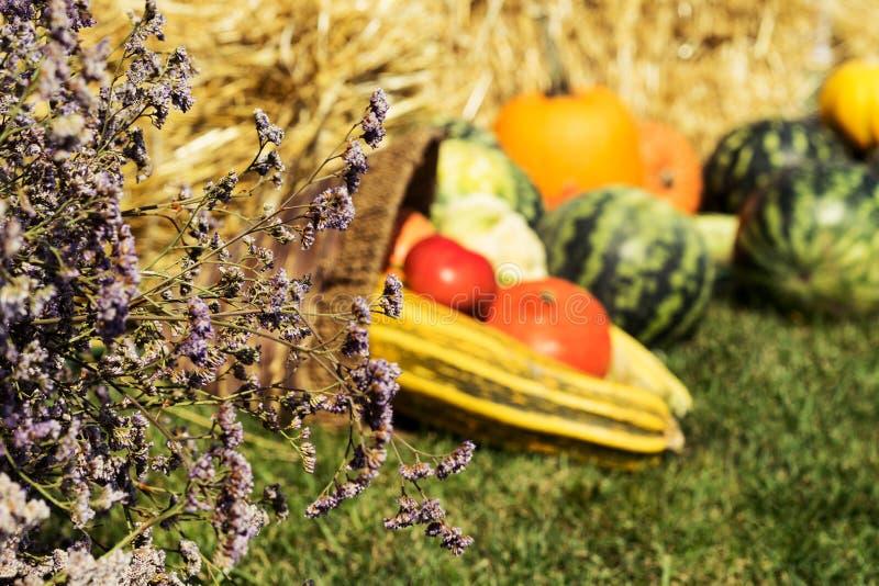 Surtido de verduras frescas sand?a, calabazas y calabac?n, tomate, ma?z, pimienta en el fondo de la paja y gra verde imágenes de archivo libres de regalías