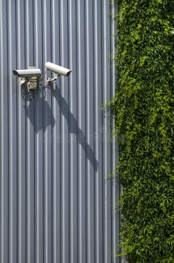 Security cameras on a metal wall, next to green ivy. A surveillance camera on the metal wall, near green ivy royalty free stock photos