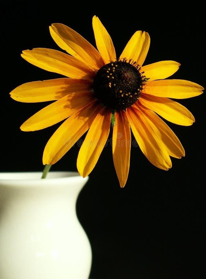 Download Susan Black-eyed imagen de archivo. Imagen de vida, amarillo - 189267