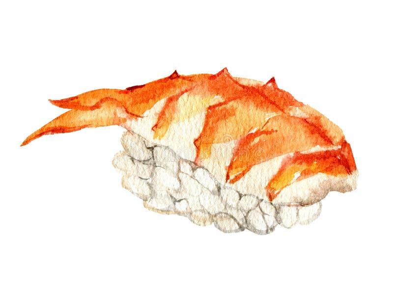 Sushi nigiri com camarão-tigre, isolado em fundo branco, aquarela fotos de stock royalty free