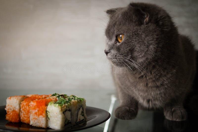 Sushi och katt royaltyfri fotografi