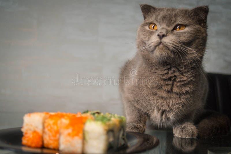 Sushi och katt royaltyfria bilder