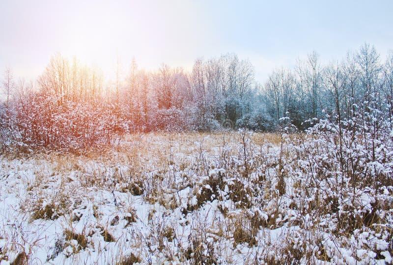 Susi drzewa i kwiaty zakrywający z śniegiem Czeski zima krajobraz zdjęcie stock