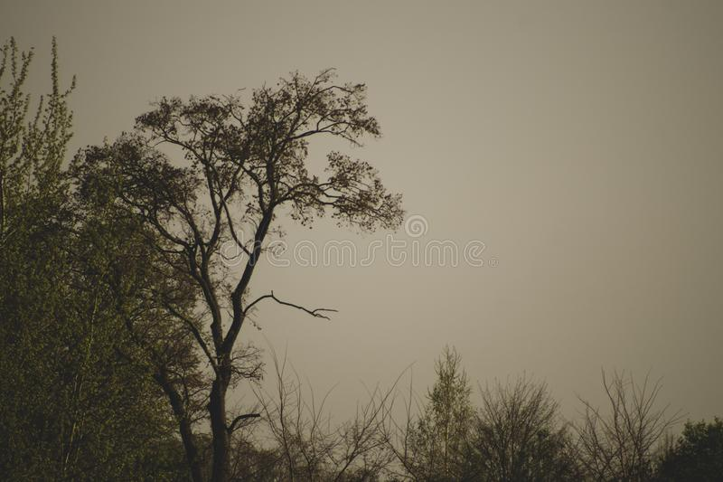 Susi drzewa w ponurym dniu w lesie zdjęcia stock