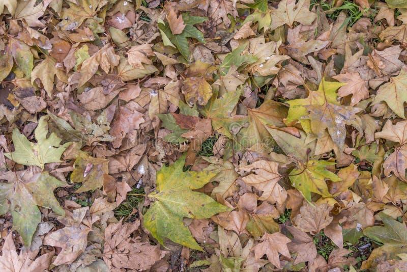 Susi lasowi jesień liście od parka cit na dniu zaświecają jak tekstura obraz royalty free