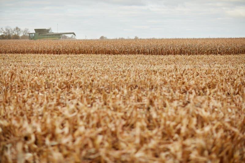 Susi pszeniczni uprawa, ścierń i syndykata żniwiarz, obraz royalty free