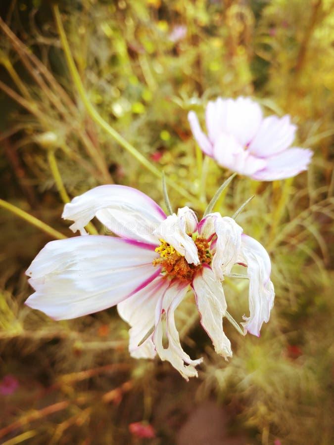 Susi wildflowers zdjęcia royalty free