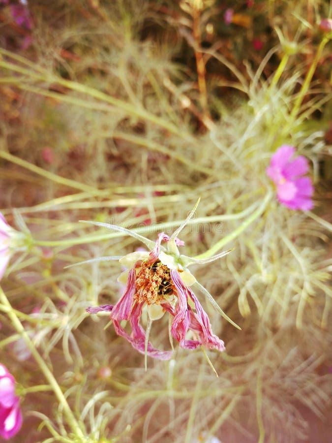Susi wildflowers fotografia stock