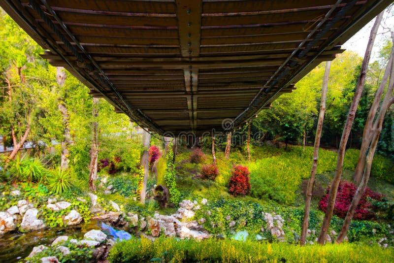 Suspansion bro eller spångmitt av träden, sikt under spång royaltyfri bild