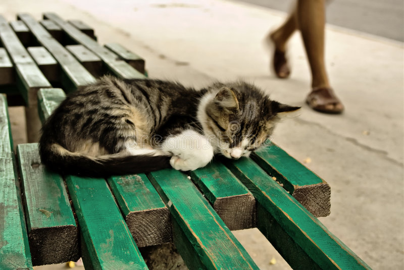 Suspenda o gatinho em um banco imagens de stock royalty free