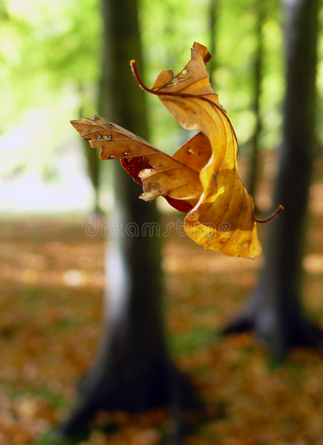 Suspended fall royalty free stock images
