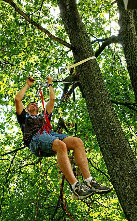 Free Suspended From Ropes In A Tree Stock Photography - 5970322