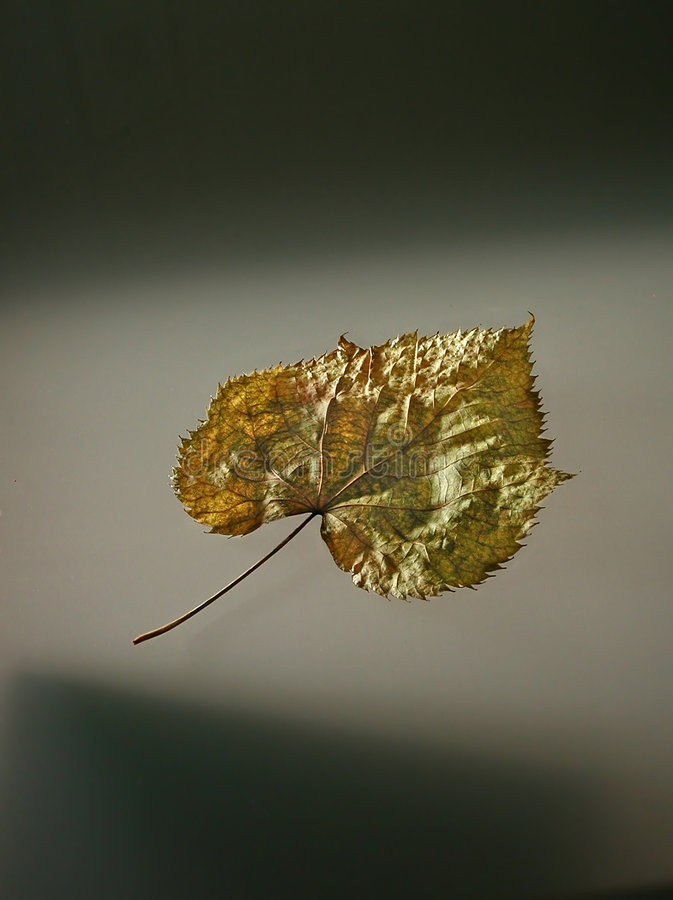 Free Suspended Leaf Royalty Free Stock Photography - 16947