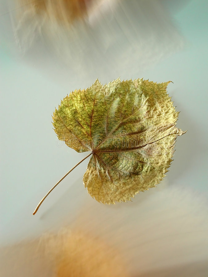 Free Suspended Leaf Royalty Free Stock Photos - 16948