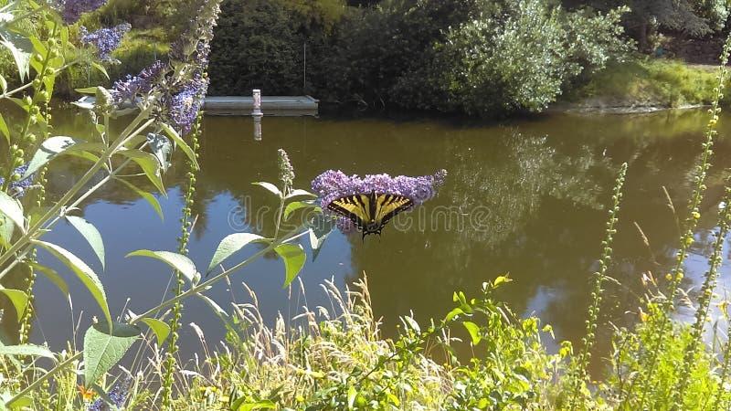 Suspensão da borboleta imagem de stock royalty free