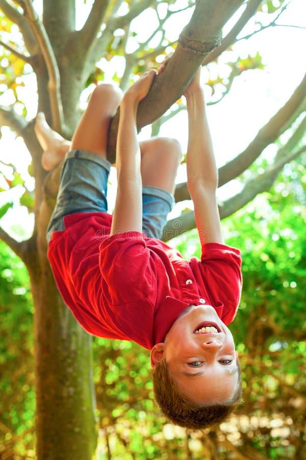 Suspensão de suspensão do menino de um ramo de árvore imagem de stock royalty free