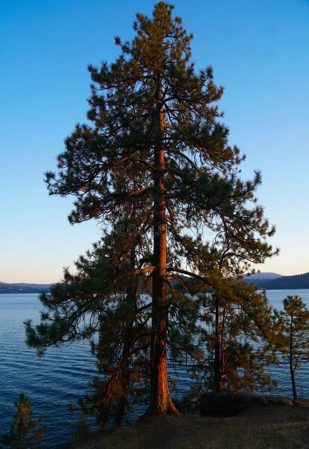 Suspensão para fora pelo lago em Coeur D 'Alene imagens de stock royalty free