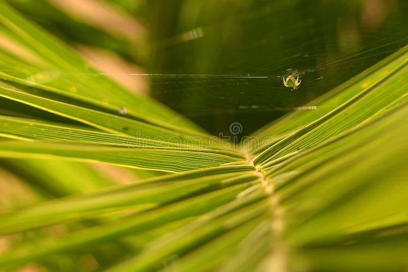 Download Suspension stock image. Image of green, cobweb, spider, creepy - 8939