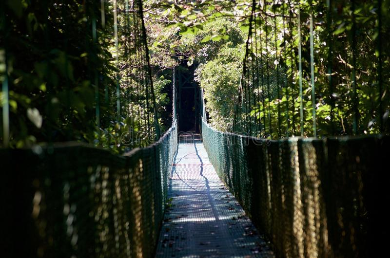 Suspension bridge over forest royalty free stock photography