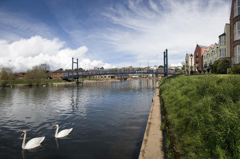 Suspension Bridge at Exeter Quayside. Swans glide along the river Exe by the suspension bridge at the Historic Quayside in Exeter stock image