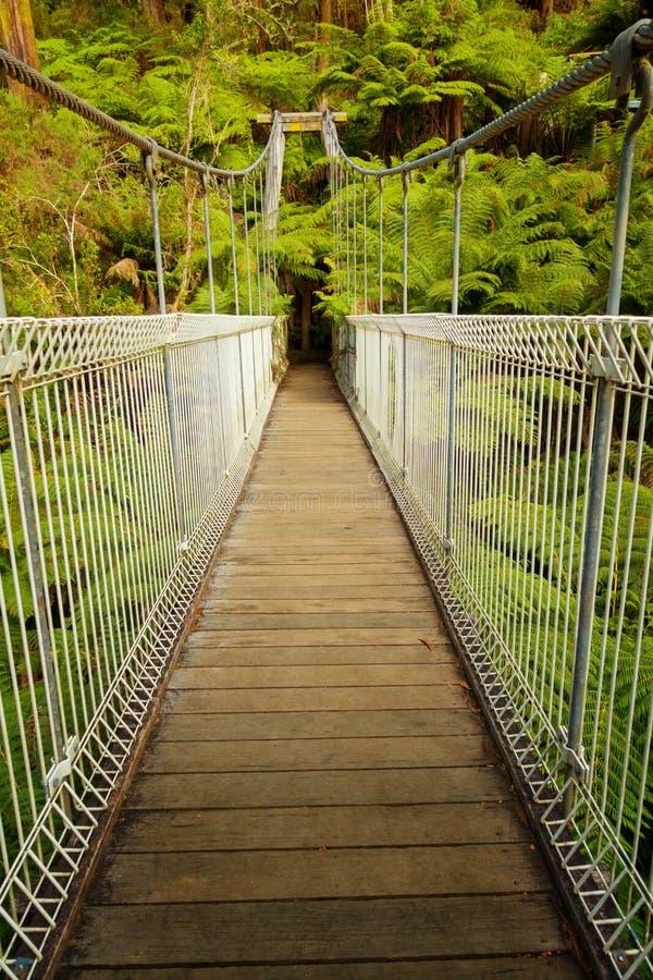 Suspension bridge in forest. Suspension bridge in Tarra Bulga National Park in South Gippsland, Australia royalty free stock image