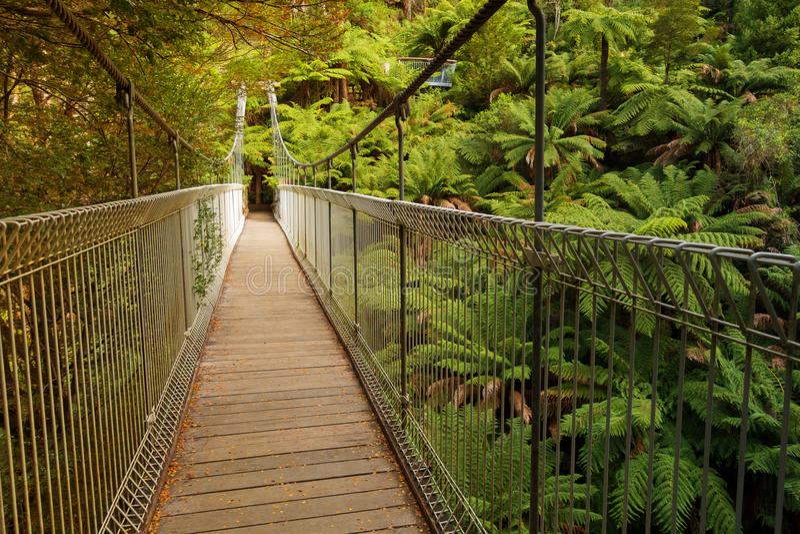 Suspension bridge in forest. Suspension bridge in Tarra Bulga National Park in South Gippsland, Australia stock images
