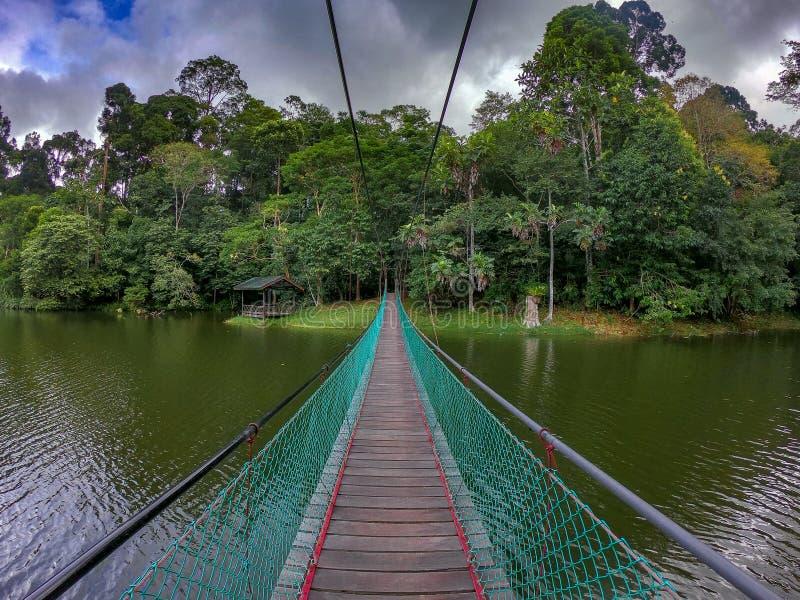 Suspension bridge, sandakan, sabah malaysia. The suspension bridge is located at rainforest discovery centre, sandakan, sabah. RDC is a home to many wildlife stock image