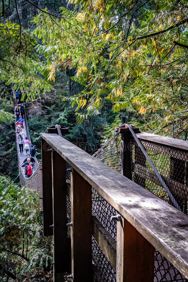 Suspension Bridge in Lynn Canyon National Park royalty free stock photography