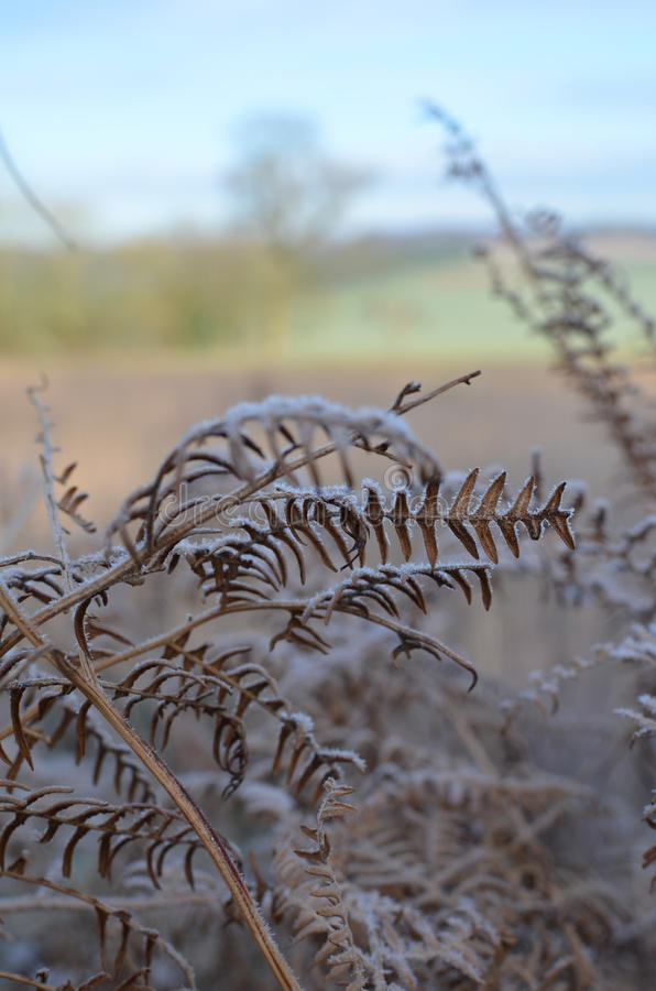 The Sussex countryside in Winter. stock images