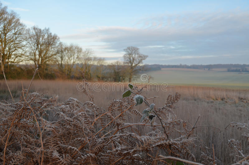The Sussex countryside in Winter. royalty free stock images