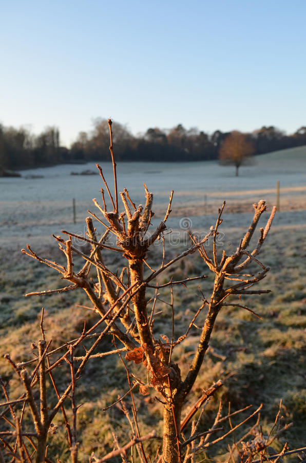 The Sussex countryside in Winter. royalty free stock photos