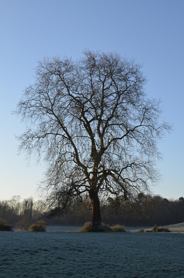 The Sussex countryside in Winter. stock photography