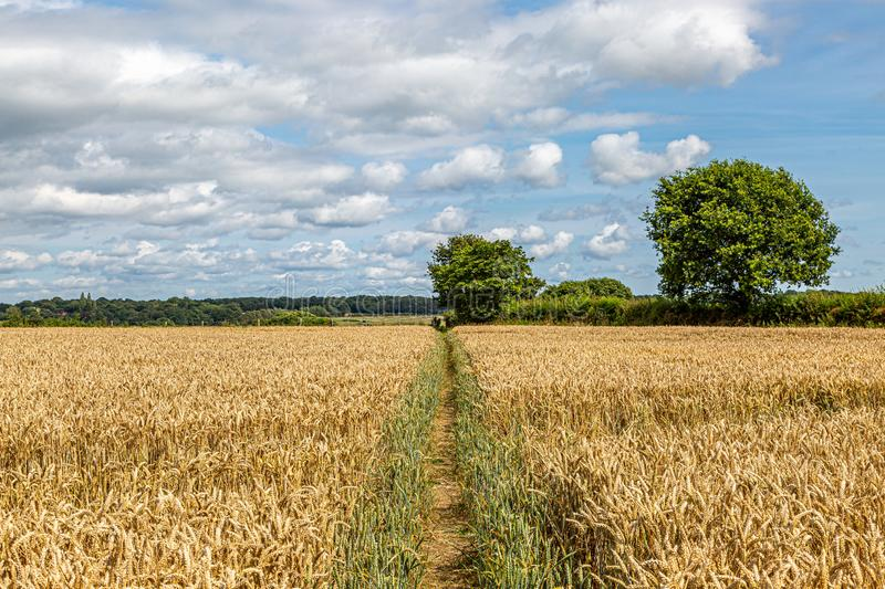 Sussex Farm Landscape royalty free stock photography