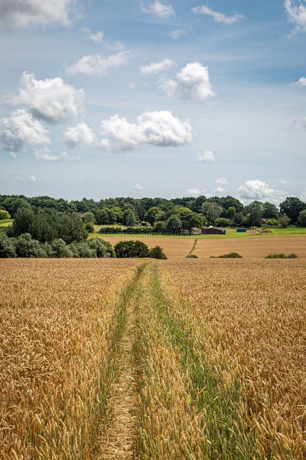 Sussex Farmland latem fotografia royalty free