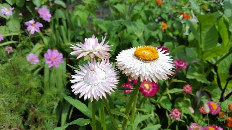 Sussex-Garten-Blumen stockfotos