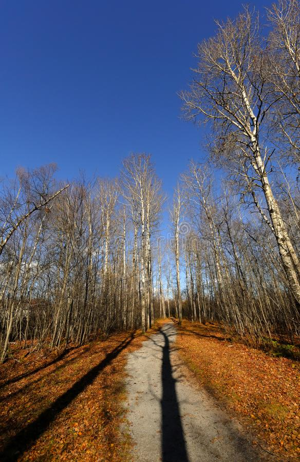 Sussex-Hinterbaum beschattet Herbst stockbilder