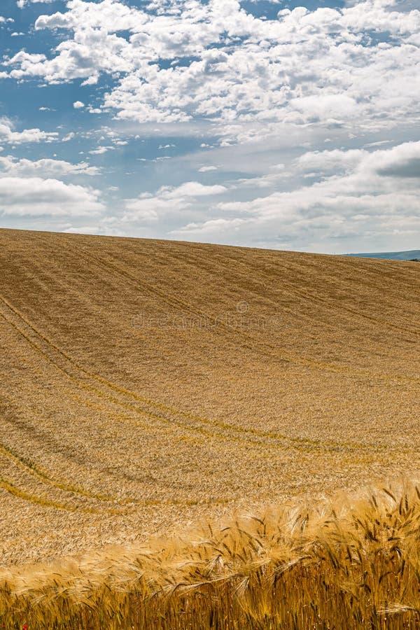 Sussex jordbruksmark i sommar royaltyfri foto