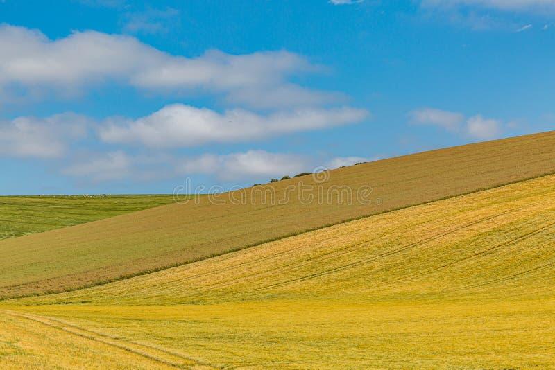 Sussex jordbruksmark i sommar royaltyfri fotografi