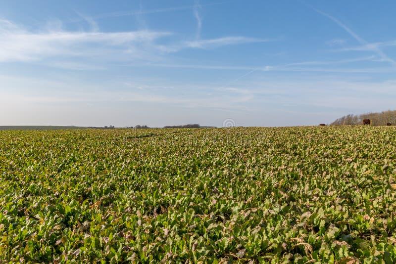 Sussex jordbruksmark arkivbild