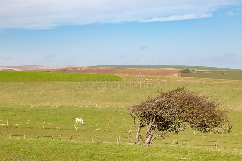 Sussex landskap royaltyfria bilder