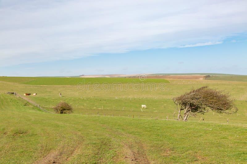 Sussex landskap royaltyfri foto