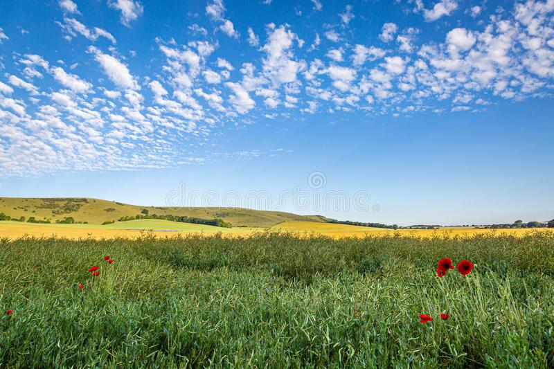 A Sussex Summer Scene. Fields in Sussex on a sunny summers day, with poppy flowers in the foreground stock image