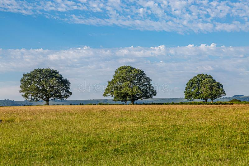 A Sussex Summer Scene. Trees in a field in Sussex on a sunny summers day royalty free stock images