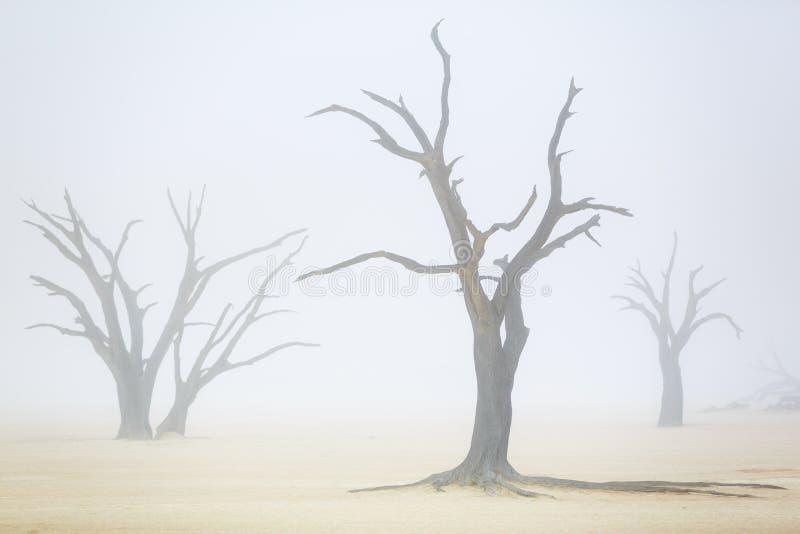 Sussusvlei Deadvlei - Ναμίμπια στοκ φωτογραφία με δικαίωμα ελεύθερης χρήσης