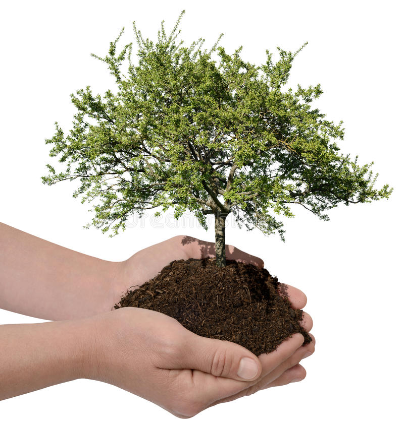 Sustainability. Green nature and sustainability concept stock photos