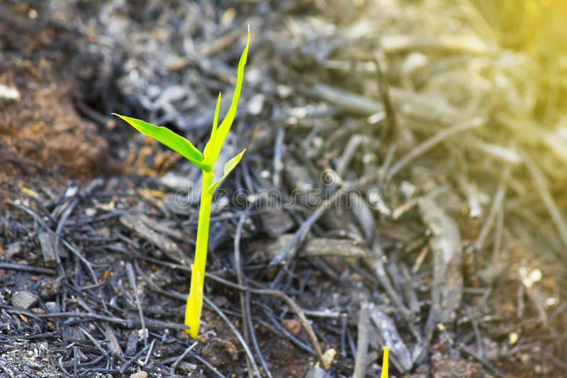 Sustainability,Green seedlings in new life concept. Sustainability,Green seedlings in new life concept stock photography