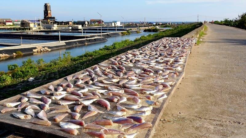 Suszę suszył ryby w słońcu na dennym dajku zdjęcia royalty free