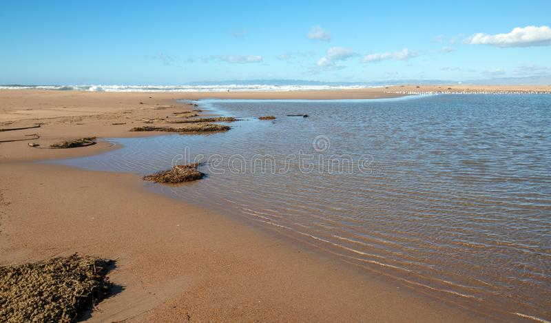Suszarniczy Kelp i morze trawa przy Santa Maria rzecznym ujściem przy Rancho Guadalupe piaska diunami w Środkowym Kalifornia usa fotografia royalty free